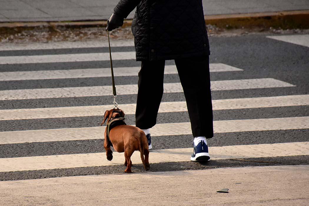 Tenencia responsable de mascotas: exigen la creación de la comisión de seguimiento