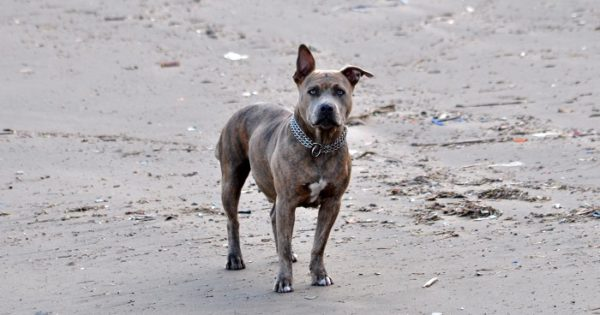 Tenencia de perros: una por una, las multas decretadas por Arroyo