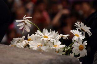 """""""Ciclo 25N"""" para conmemorar la eliminación de la violencia contra las mujeres"""