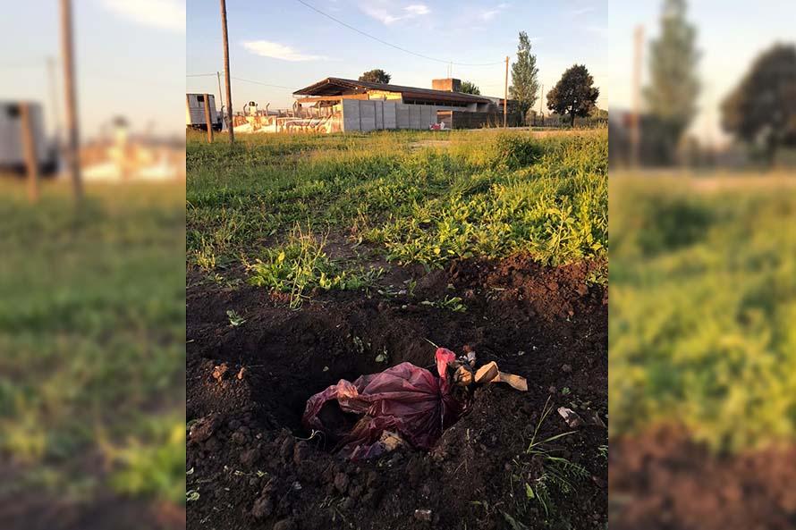 Perros muertos, irregularidades y entierros ilegales: grave denuncia contra Zoonosis