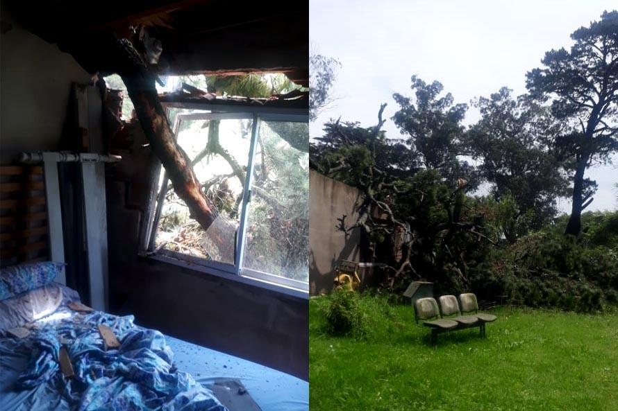 Tras la intensa lluvia, cayó un árbol sobre una casa de Parque Hermoso