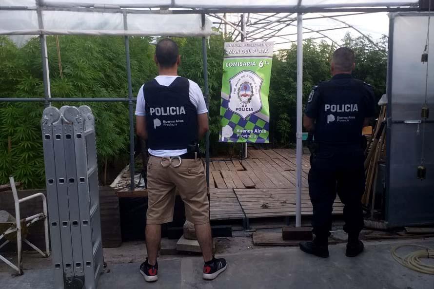 Allanan una casa y detienen a un hombre con 250 plantas de marihuana