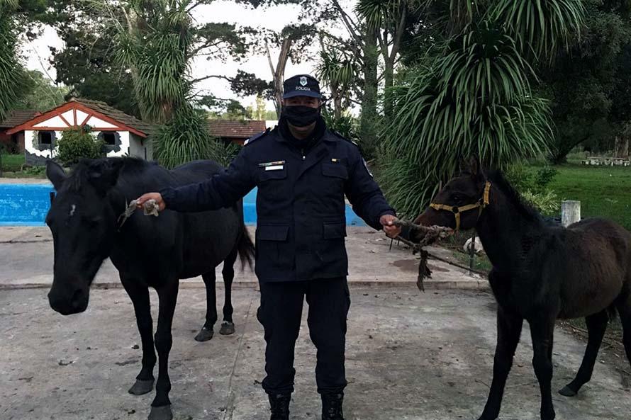 Dos detenidos por robar dos caballosy amenazar con un arma a su dueño