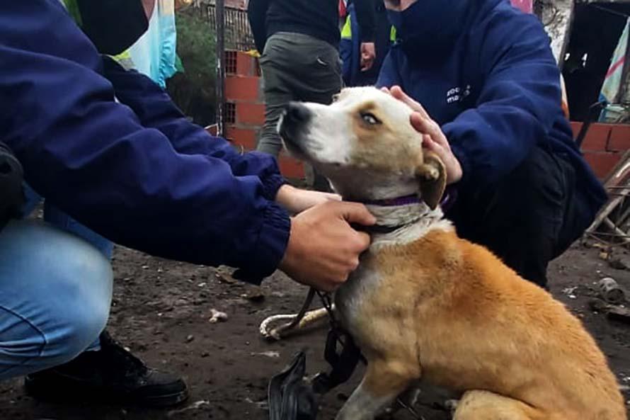 Rescatan a un perro tras una denuncia por maltrato animal