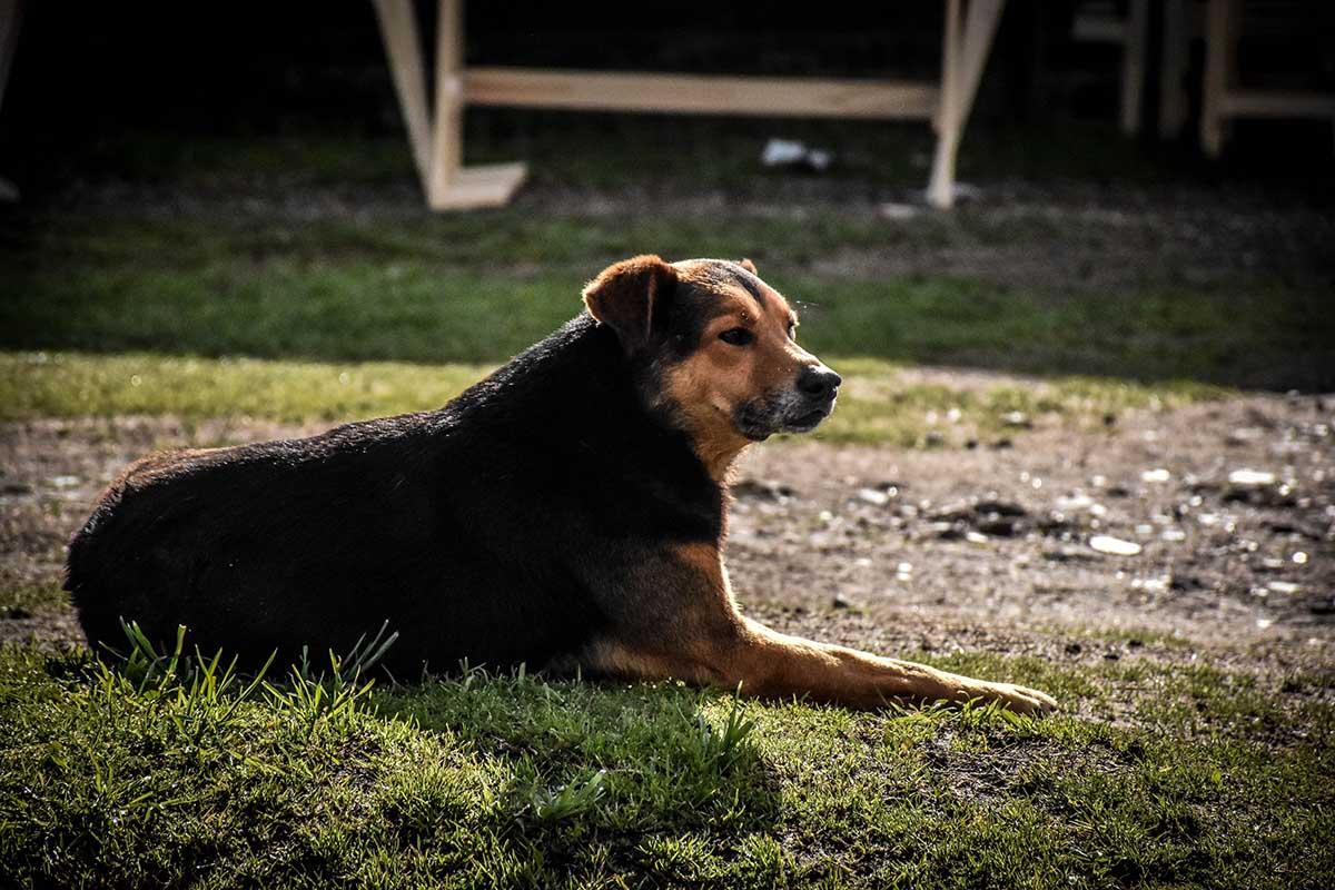 Castración de mascotas: reabren la asignación de turnos