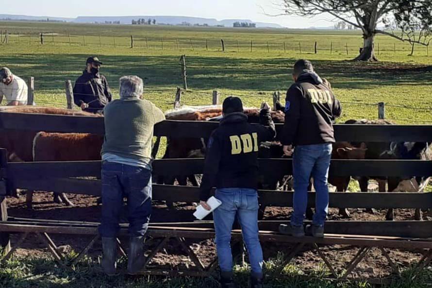 Recuperan otras 860 cabezas de ganado robadas, valuadas en $18 millones