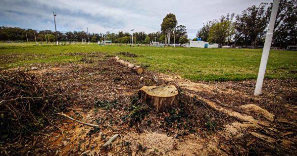 Polémica y malestar de vecinos por la posible tala de 29 eucaliptos en Parque Camet