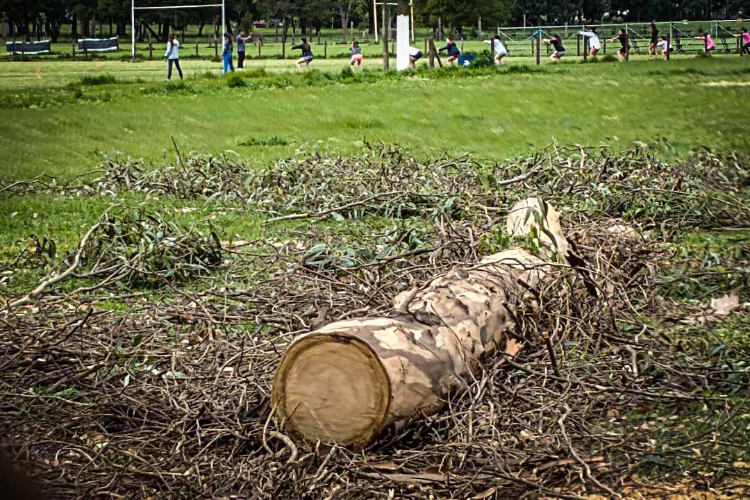 Tala de eucaliptos en Parque Camet: una carta abierta dirigida al intendente