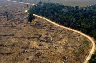 """Arquitectos advierten por una tala de árboles """"sin control"""" en Mar del Plata"""