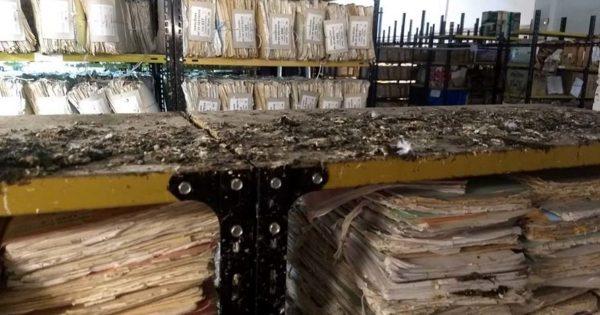Un archivo judicial lleno de ratas y palomas: reclaman inspecciones y medidas