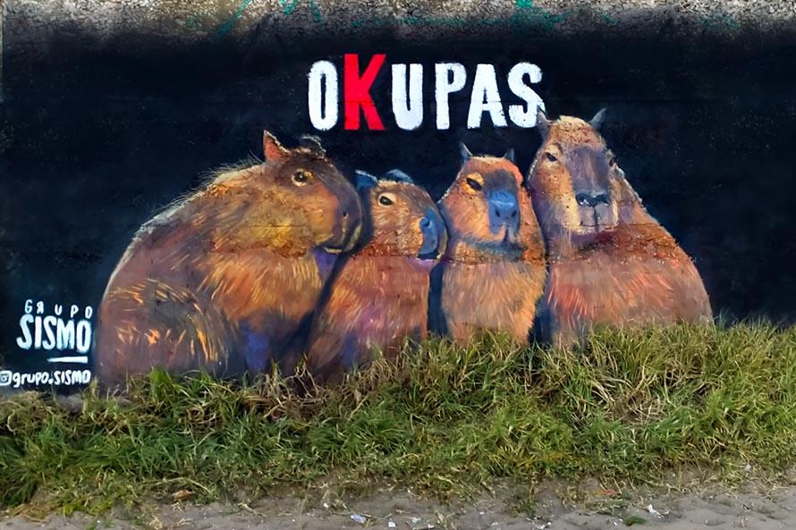 """Los carpinchos """"okupas"""" que custodian la playa en """"La Perla 5"""""""
