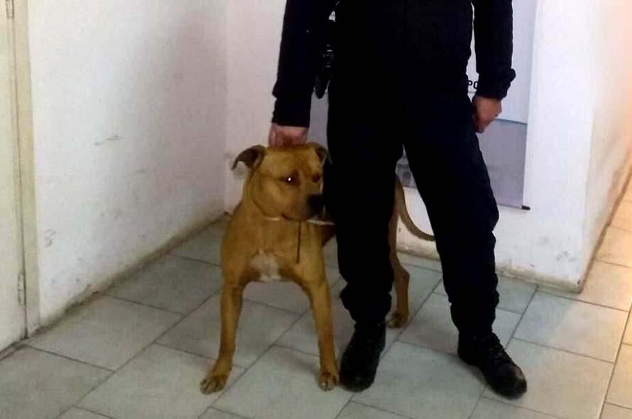 Rescataron a un perro que había sido robado de una casa en Playa Serena